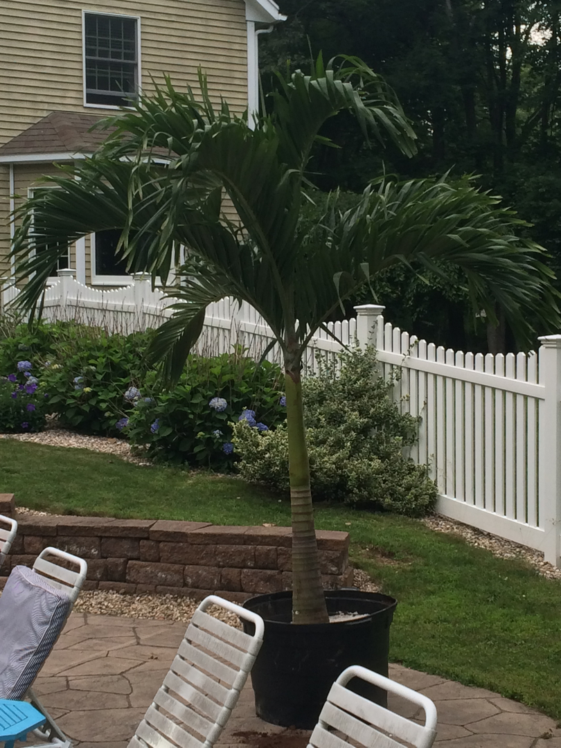 Need A Palm Tree In Co...